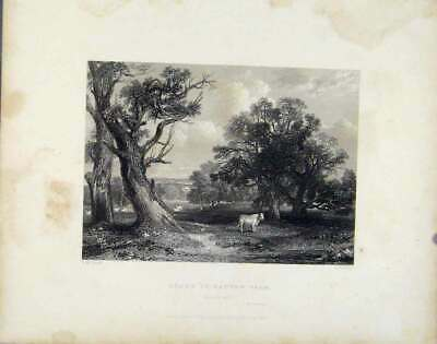 Original Old Antique Print Fine Art Scene Cadyow Park Scotland 1839 Victorian
