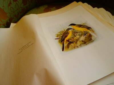 A Collection Of 100 Antique Bird Prints with Paper Protective Cover