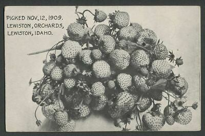 Lewiston ID: Postcard STRAWBERRIES PICKED 1909 DAHLHJELM CO. FRUIT LANDS ORCHARD