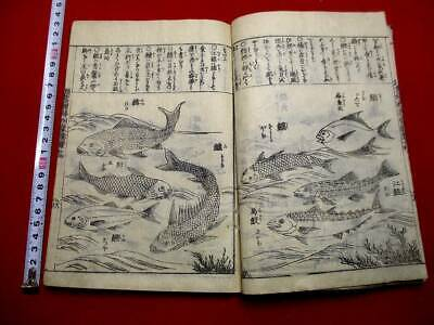 1-10 Japanese KINMO14 Whale fish plant insect Woodblock print BOOK