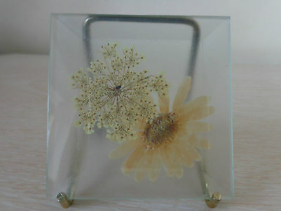 Rare Pressed Flowers Under Glass From America