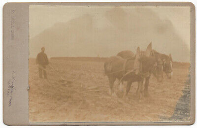 CABINET CARD Photograph Plough Man with Horses by Bell of Hawick