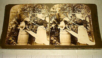 1897 American Stereoscopic Stereoview Card WATCHING YOUNG LOVERS HUMOR