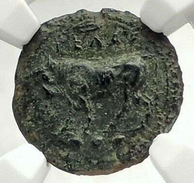 GELA in SICILY Authentic Ancient 420BC Greek Coin w BULL & GELAS NGC i76853