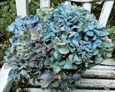 12 Dried Hydrangea Flowers Light Green, Blue, Cream + Purple Wedding DIY SECONDS