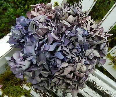 12 Dried Hydrangea Flowers Dark Purples and Pinks Primitive DIY Craft Farmhouse