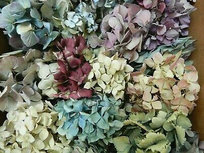 40+ Box Dried Hydrangea Flowers Pieces Lavenders, Purples, Pinks + Cream Crafts
