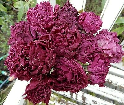 12+ Dried Peony Flowers, Burgundy + Dk. Pink, Stems, Wedding Bouquets, Farmhouse