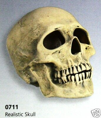 Ceramic Bisque Realistic Skull with Light Scioto Mold 711 U-Paint Ready To Paint
