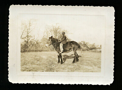 """Dated 1944 Snapshot Photo African American Black Man Riding Mule - """"On the Farm"""""""