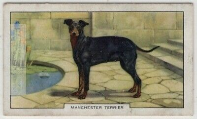 Manchester Terrier Dog Canine Pet 1930s  Ad Trade Card