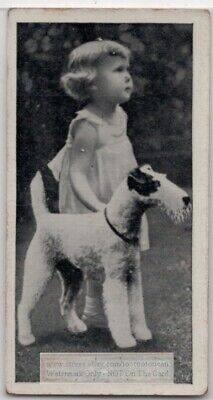 Wire Haired Fox Terrier Dog With Young Child 1930s  Ad Trade Card