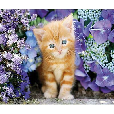5D DIY Full Drill Diamond Painting Lovely Cat Cross Stitch Embroidery Kits