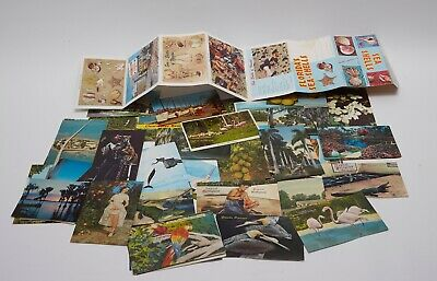 Large Vintage Postcards Lot - Florida FL USPS USA Post Card Color Alligator