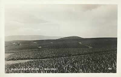 Vintage Real Photo Post Card Of Pineapple Fields On Molokai, Hawaii