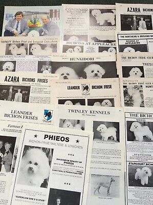 Bichon Frise Kennel Breed Clippings