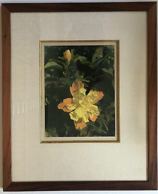 1940's Vintage Hand Colored Photograph By Edithe Beutler 'Hibiscus' Yellow