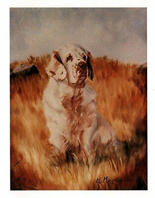 New Clumber Spaniel in Field Notecards 6 Note Cards 6 Envelopes By Ruth Maystead