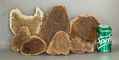 Red River Gum, Coolibah, Mallee, High Figured Burl Caps  SCR464