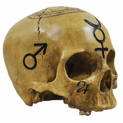 Witchcraft Pagan Skull