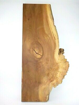 Spalted Burr English Elm wood board. Tabletop, woodturning, carving, plank. 3517