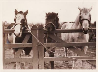 Balerno Midlothian New Rest Farm Horses ferme de repos chevaux old Photo 1930