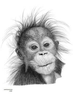 ORANGUTAN Baby  Limited Edition art drawing print signed by UK artist