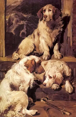 Dream-art Oil painting clumber spaniels animals dogs Hairy dog hand painted art