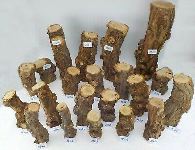 Seasoned English Burr Acacia (Robinia) woodturning or wood carving log blanks.