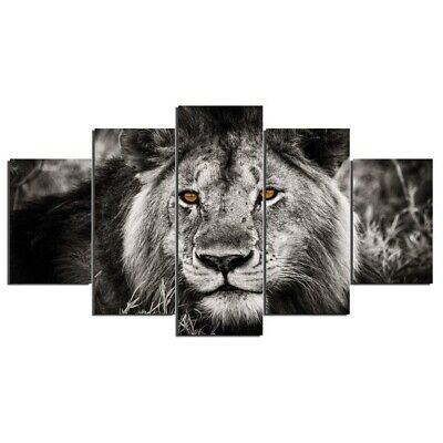Female Lion and Orange Eyes 5 Pcs Canvas Wall Art Painting Poster Home Decor