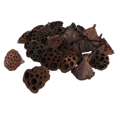 30pcs Natural Dried Lotus Pod Flowers Fruit For Xmas Floral Decor Crafts DIY