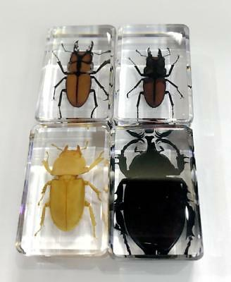 01SZ Insect paperweight Stag beetle bug Collection Specimen Crafts