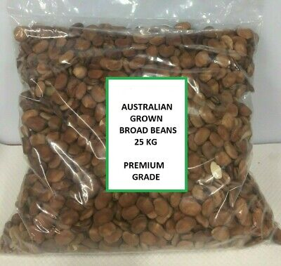 Australian Broad Beans 25 Kg, Caters Bulk Buy, Pick Up Or Freight