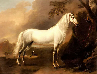Dream-art Oil painting jan wyck - a grey arab stallion in a landscape horse art