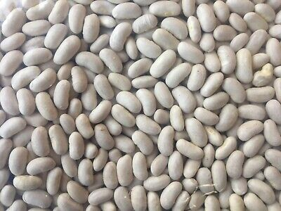 Canadian Grown Cannellini Beans 25 Kg, Caters Bulk Buy, Pick Up Or Freight