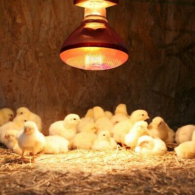 200W/250W Infrared Red Bulb for Brooder Poultry Heat Lamp Brooder Chicks Puppies