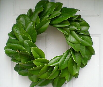 "Fresh Green Magnolia Wreath to Dry,  Weddings + Fall  Decorating Large 20"" Size"