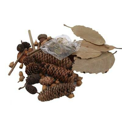 Decorative Natural Pine Cone Dried Pinecones DIY Home Vase Decoration D