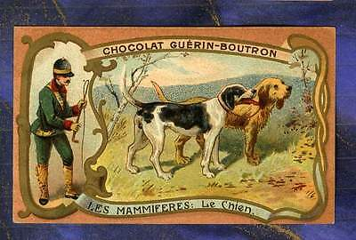 CHROMO GUERIN-BOUTRON mammifere Chien Chasse Hunting Dog Herold old Trade card