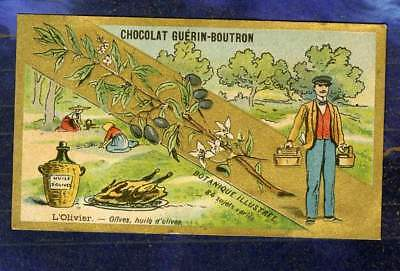 CHROMO GUERIN-BOUTRON BOTANIQUE HUILE D'OLIVE ACEITUNA Champenois Botanical card