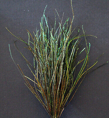 """LG  Fly Tying DYED PEACOCK HERL   Bulk package very nice color /""""GREEN/"""""""