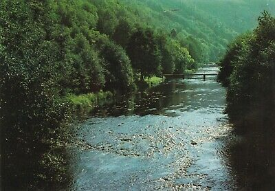 carte postale  ardenne rivieres et forets