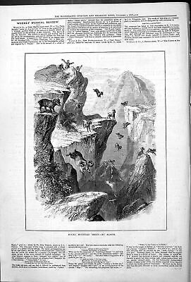 Original Old Antique Print Rocky Mountain Jumping Sheep An Alarm 1878 Victorian