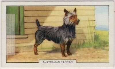 Australian Terrier  Dog Canine Pet 1930s  Ad Trade Card