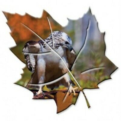 Redtail Hawk Bird Metal Wall Art Maple Leaf Red Tail Jim Backus Photographic USA