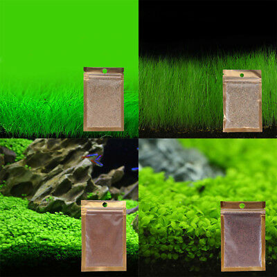 5X Aquarium Plant Seeds Fish Tank Aquatic Water Grass Foreground Easy Plants