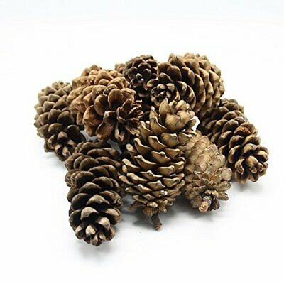 HOMETOOK Natural Pine Cones, Lodge Pole Decorative Fall Winter Holiday Home