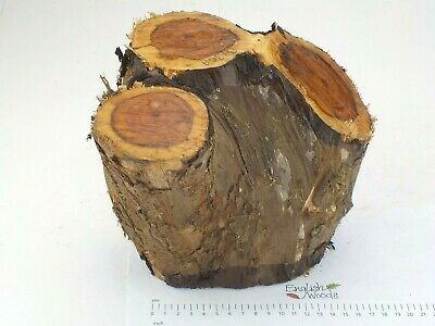 English Crotch Yew wood turning or carving log blank. 130 x 190 x 250mm.  3936A