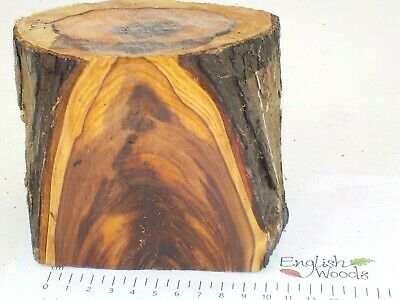 English Yew woodturning or wood carving log blank.  130 x 100mm.  3939A
