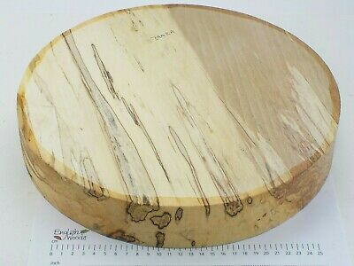 English Spalted Beech woodturning or wood carving bowl blank. 330 x 56mm. 3942A